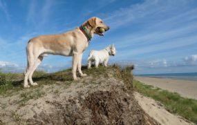 Winterton Holidays Dogs welcome Great Yarmouth Norfolk | Friendly site